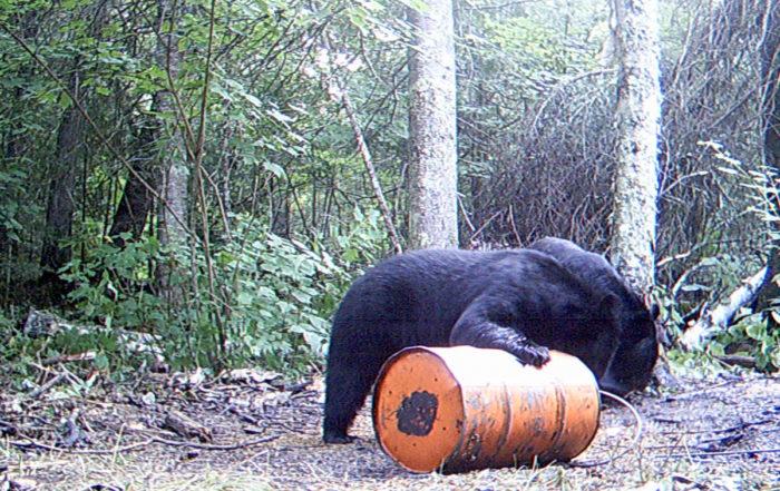 KDCA BIg Bears